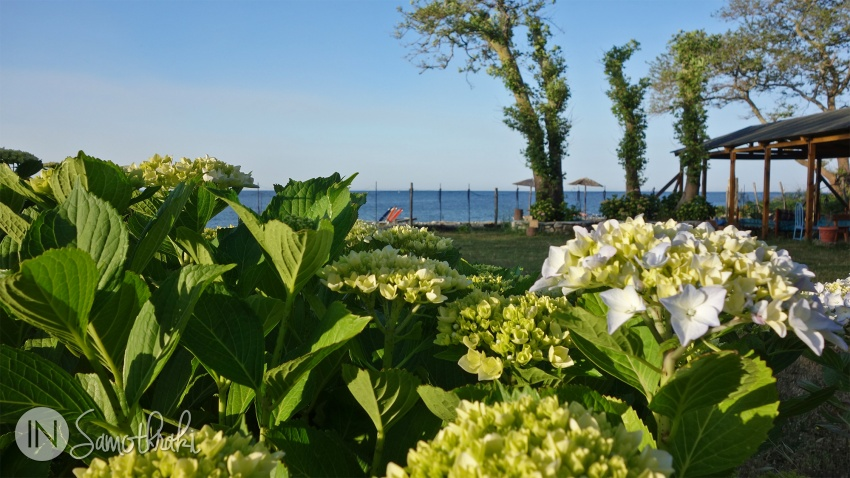 Hydrangea flowers at Archondissa Hotel